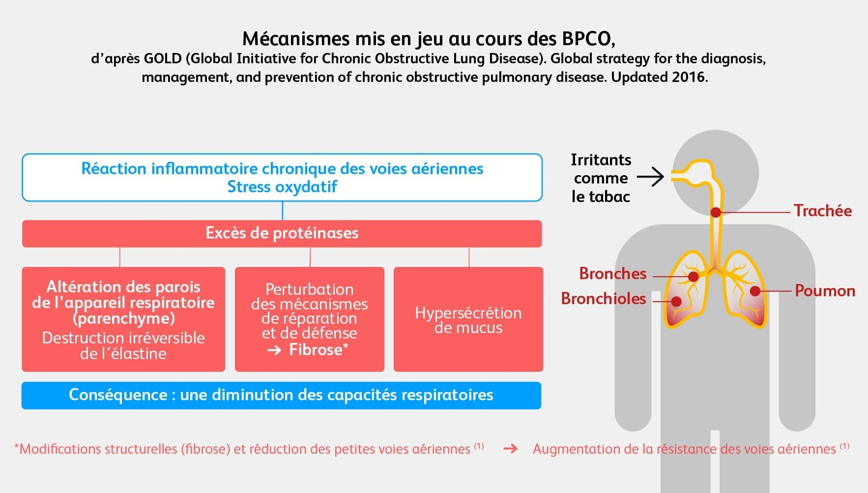 BPCO physiopathologie
